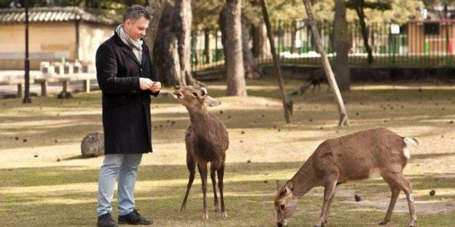 Нара: путешествие к оленям и древним храмам Японии