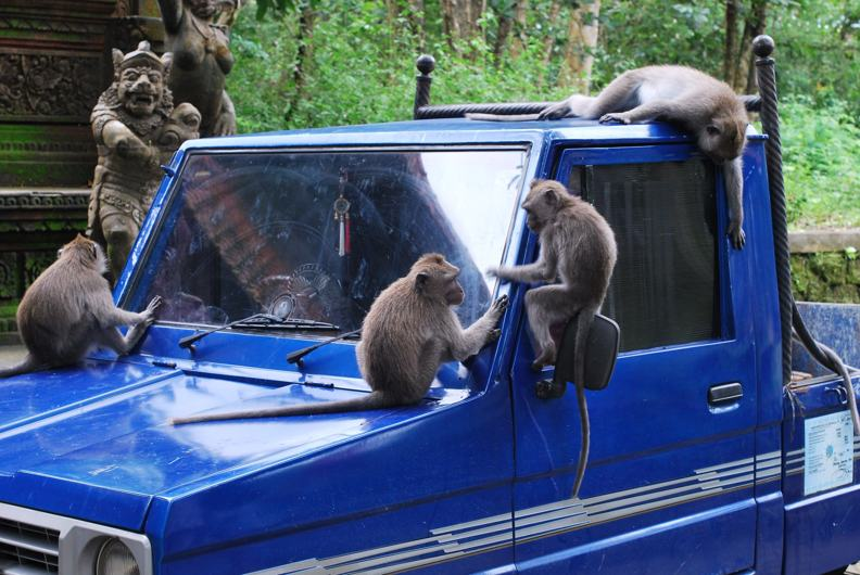 Monkey Forest на Бали или Обезьяний Лес