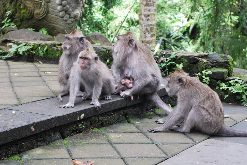 Бали Monkey Forest