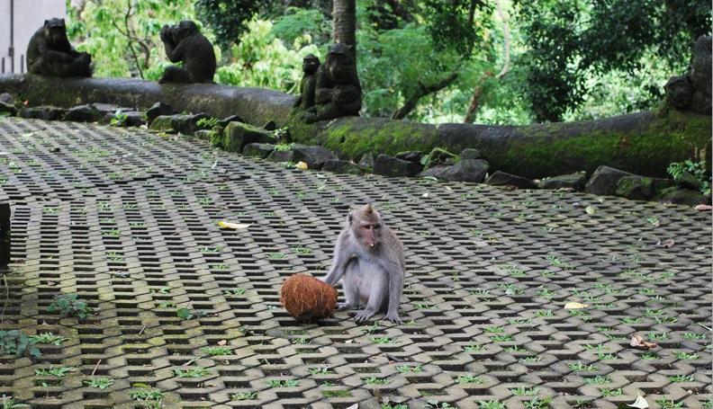 Убуд Monkey Forest