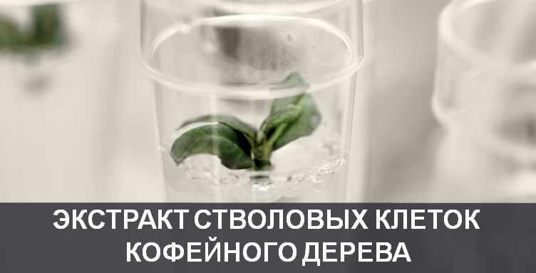 Экстракт стволовых клеток кофейного дерева Coffea Bengalensis