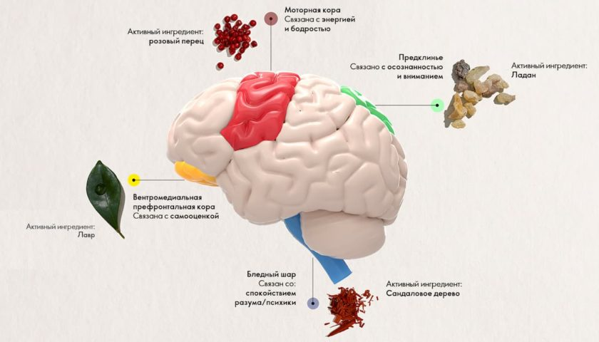 Нейробиология и Эфирные Масла Орифлейм