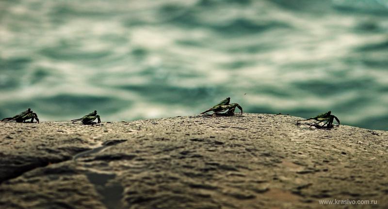 Океанические Крабики на камнях